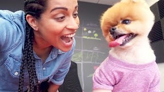 Download The Time I Had a Business Meeting With a Dog (Day 776) Video