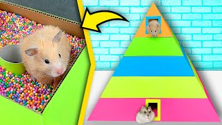 Download Hamsters in 5-Level Pyramid Maze   Rainbow maze for hamsters Video