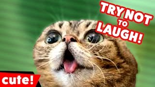 Download Try Not To Laugh at These Funny Cat Videos of 2016 Weekly Compilation | Kyoot Animals Video