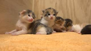 Download 14Kitten - Live aus der Katzenkiste Video