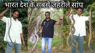 Download यही है वो 4 जहरीले सांप, जो अक्सर इसके ही काटे जाने पर लोगों की मौत होती है, Most venomous snake Video