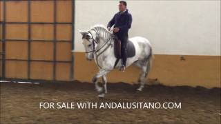 Download RONCA EUCALIPTO PRE MARE FOR SALE Video