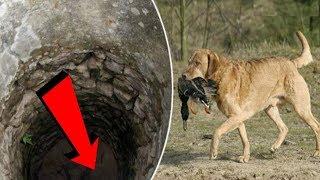 Download Chú chó ngày nào cũng mang đồ ăn thả xuống giếng cạn, khi nhìn xuống dưới đáy thì ai cũng bất ngờ Video