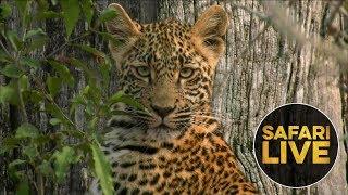 Download safariLIVE - Sunrise Safari - August 27, 2018 Video