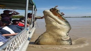 Download Top 5 World's Biggest Crocodiles in the World Video