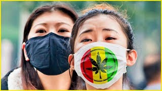 Download Is China Legalizing WEED? Video