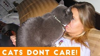 Download Cats Don't Care Funny Pets Videos | Best Funny Cat Videos Ever Video