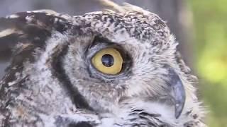 Download La biodiversité boréale Video