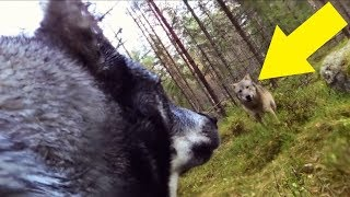 Download Guy Who Put A GoPro On His Dog Is Chilled To The Bone When He Looks At The Footage Video