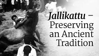 Download Jallikattu – Preserving an Ancient Tradition Video