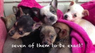 Download Heartbroken Mother Dog Reunited With Puppies Video