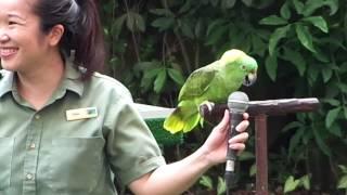 Download High Flyers Show At Jurong Bird Park Video