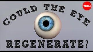 Download Could a blind eye regenerate? - David Davila Video