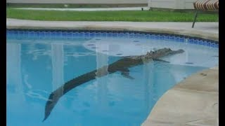 Download 8 Bizarre Things People Found in Their Pool Video