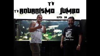 Download TV AQUARISMO JUMBO - Episódio 38 - Junior Ferreira - Novo Super Tank - Jumbista Raiz Video