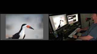 Download Ray's Wildlife Photography Post Processing Workflow Video