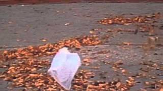 Download 'American Beauty' - Thomas Newman (from the 'plastic bag scene') Video