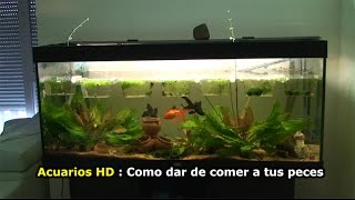 Download ACUARIOS HD : Respuesta a NERO ( Como dar de comer a los peces ) Video