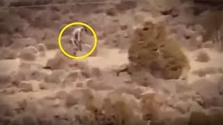 Download 5 Mutants Caught On Camera & Spotted In Real Life! Video