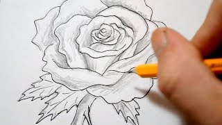 Download How to Draw a Rose - Quick Sketch Video