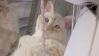 Download 🙀 WHERE IS LAZARUS THE FAMOUS FROZEN KITTEN?! 😸 Video