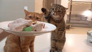 Download 일곱 고양이와 저녁 먹는 날 : 목살 스테이크 Video