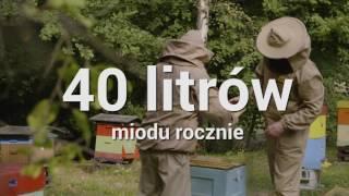 Download Na czym polega pszczelarstwo miejskie Video