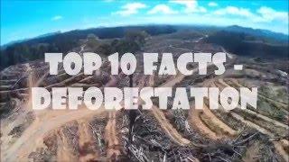 Download 10 Deforestation Facts Video