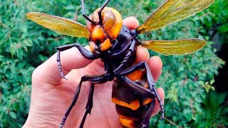 Download 10 MOST DANGEROUS INSECTS YOU MUST RUN AWAY FROM Video