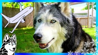 Download BRING A DOG ON A PLANE ? Video