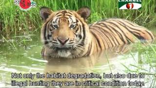 Download Nature and Life - Episode 196 (Endangered Wildlife of Sundarbans) Video