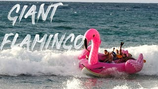 Download GIANT FLAMINGO FAILS WITH JOOGSQUAD Video