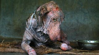 Download Amazing transformation of sick dog who had given up hope Video