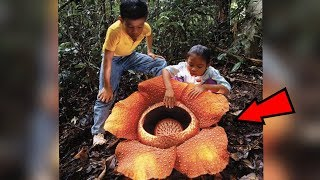 Download 5 Strangest Things Found In The Jungle! Video