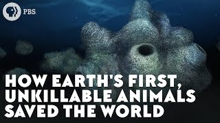 Download How Earth's First, Unkillable Animals Saved the World Video