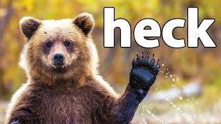 Download HECK | Bear Simulator Video