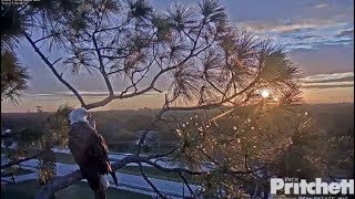 Download SWFL Eagles ~ Sunrise, Egret Snack, Bonding, Breakfast & Nest Time Dad 11.17.17 Video