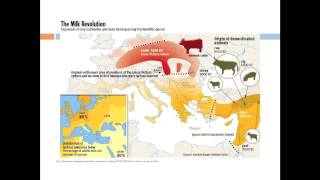 Download Evolution of Lactase Persistence Video