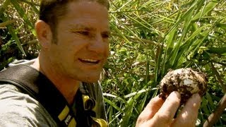 Download Saltwater Crocodile Protects Her Nest | Deadly 60 | BBC Earth Video