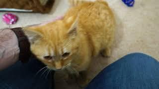 Download Kitten Close Up 2017-12-06 Video