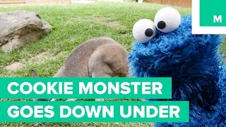 Download Cookie Monster Goes From Sesame Street to Down Under Video