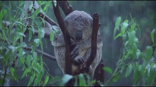 Download True Facts About Marsupials Video