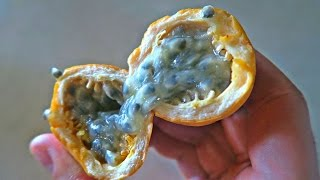 Download Passion Fruit Taste Test Video