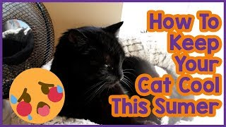 Download How to Keep Your Cat Cool in Summer! 5 Tips on Keeping Your Cat Cool in the Summer Heat! Video