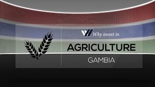 Download Agriculture Gambia - Why invest in 2015 Video