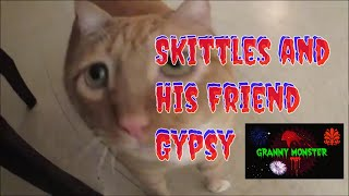 Download Skittles and His Friend Gypsy Video