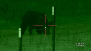 Download Wild Hog to Table - Ruger 10/22 Video