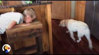Download Smart Dog Plays Hide and Seek With Human Brother | The Dodo Video