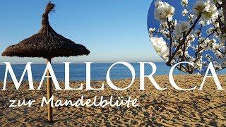 Download Mallorca zur Mandelblüte (2018) | OnTour #5 Video
