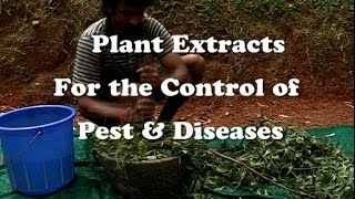 Download Plant Extracts for the Control of Pest & Diseases Video